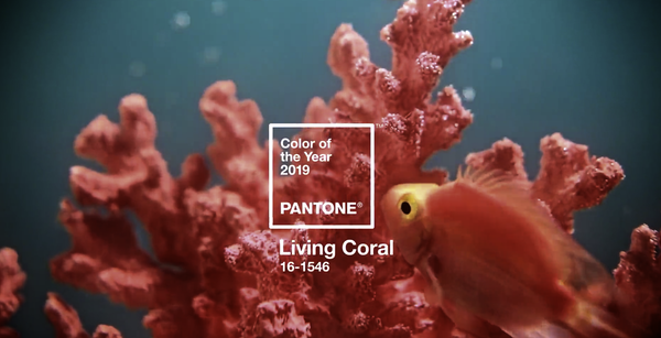 Couleur Coral 2019