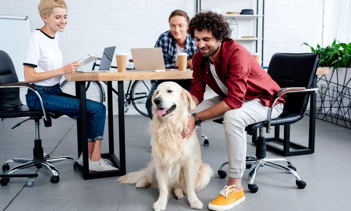Les animaux au bureau