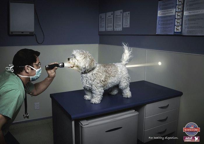 publicité croquettes chien