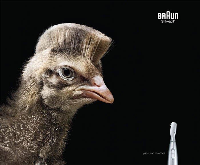 animaux publicité