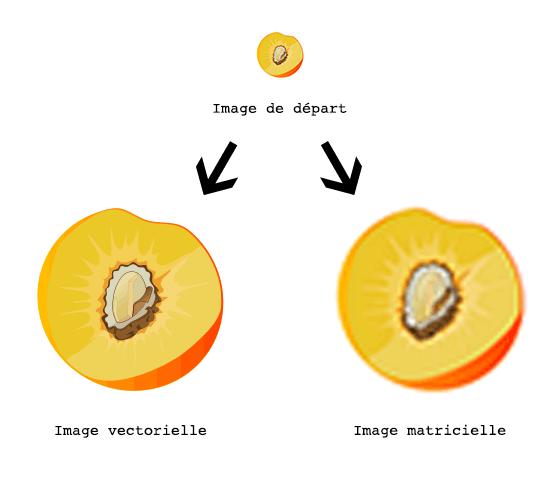Image matricielle vectorielle